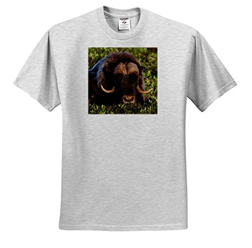 3dRose Danita Delimont - Animals - Musk Ox - T-Shirts - Toddler Birch-Gray-T-Shirt (3T) (Birch Gray T-shirt)