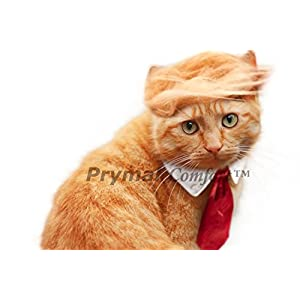 Prymal Comfort Trump Cat/Small Dog Costume and Tie for Halloween, Parties and Pictures