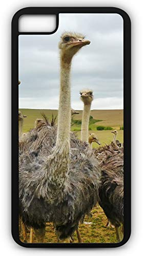 iPhone 7 Plus 7+ Case Bird Animal Nature Strauss Bouquet Ostrich Customizable by TYD Designs in Black Plastic Black Rubber Tough Case -