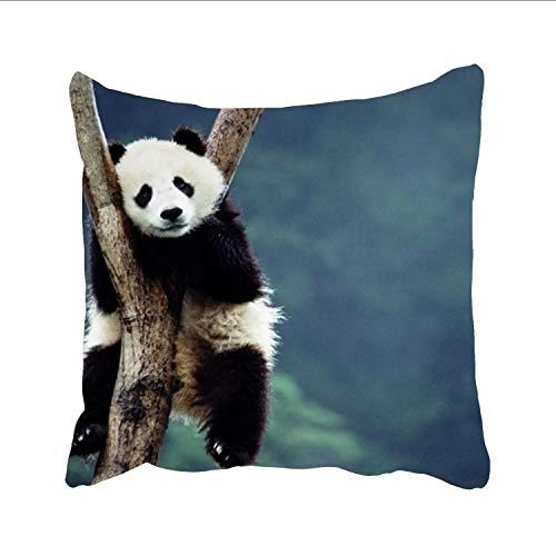 Ranhkdn Panda Desktop Sofa Simple Home Decor Pillow £¬Cotton Linen Decorative Square Throw Pillow (Dreamsack White Pillowcase)