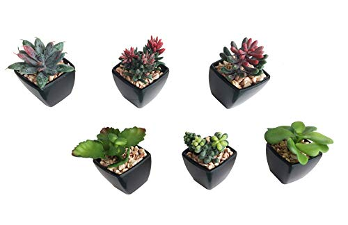 6-Pack Artificial Fake Mini Green Succulent Cactus Plant in Black Square Planter Pot w/Sand Gravel for Terrarium Zen Garden Gift Set