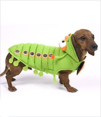 Caterpillar Costume For Dogs - Size 1 (8