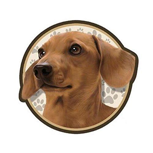 Red Dachshund Dog 3