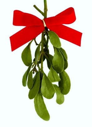 Image result for mistletoe images