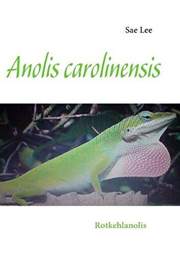 Anolis carolinensis: Rotkehlanolis