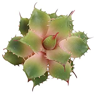 Duovlo Artificial Succulent Plant 5.15 Inch Faux Succulents Agave potatorum Flower Arrangement Craft Wall DIY Materials,Pack of 2 (Pink) 50