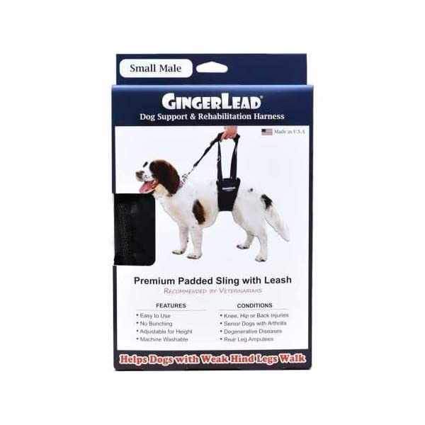 GingerLead Dog Support & Rehabilitation Harness – Small Male Sling – Ideal for Aging, Disabled, or Injured Dogs Needing… Click on image for further info.
