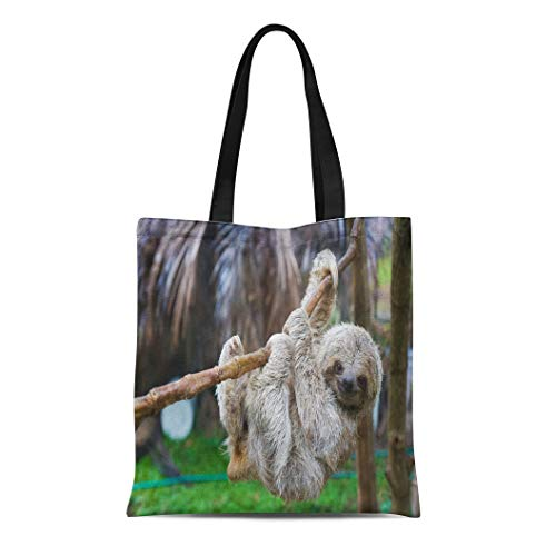 Semtomn Canvas Tote Bag Brown Sloths in Rescue Centre Costa Rica San Jose Durable Reusable Shopping Shoulder Grocery Bag (Best Shopping In Costa Rica)