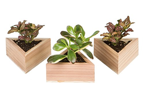 Royal Gardens Set of 3 Small Planter Pot Containers for Succulents, Air Plants, Cacti, and Other Small Greenery (Triangle, Light)