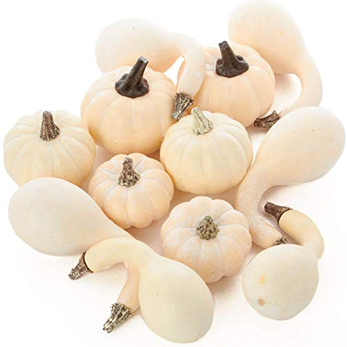 Package of 12 Assorted Harvest White Artificial Pumpkin and Gourds for Halloween, Fall and Thanksgiving Decorating