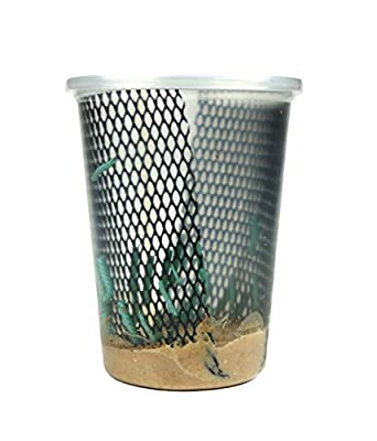Hornworms Habitat Cup (25 Count Cup) by Josh's Frogs