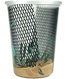 Hornworms Habitat Cup (25 Count Cup)