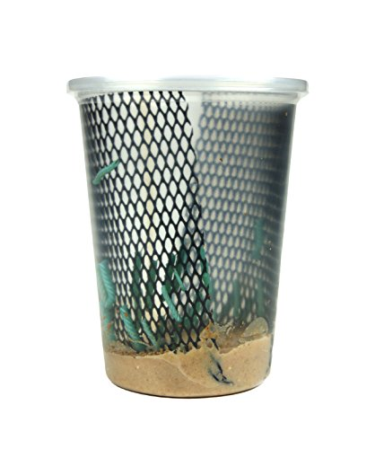 (Josh's Frogs Hornworms Habitat Cup (25 Count Cup))