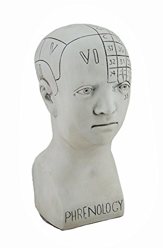 White Plaster Phrenology Head Bust 5 X 11 X 5 Inches White ()