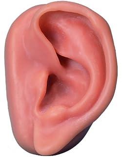 Modelo de orejas (par) blanco para acupuntura - Leonidov ...