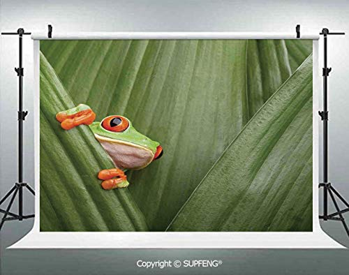 Photography Background Red Eyed Tree Frog Crowling Between Leaves Tropical Jungle Rainforest Night Art 3D Backdrops for Photography Backdrop Photo Background Studio Prop ()
