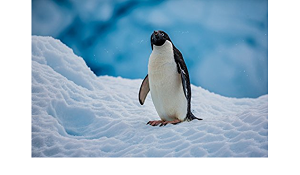 Tomorrow Sunny F001 Antarctica Snow Adelie Penguin Cute Animals Poster Art Wall Pictures For Living Room Canvas Fabric Cloth Print Posters Prints Amazon Com