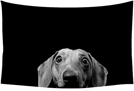 PUPBEAMO PRINTS Dachshund Animal – 32198 – Wall Tapestry Art For Home Decor Wall Hanging Tapestry Bedroom Living Room Dorm Decor 60×40 Inches