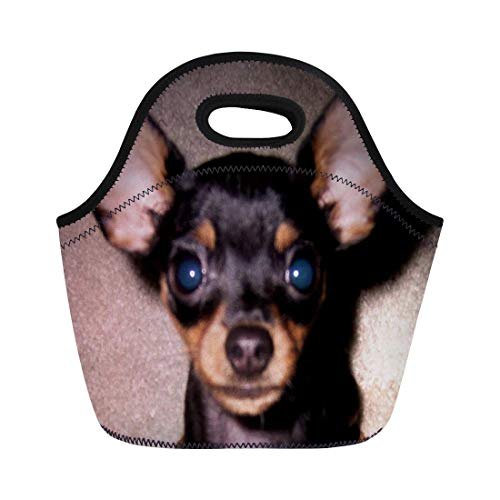 Lunch bag Min Mini Pinscher Pin Doberman Toy Dog neoprene lunch bag lunchbox tote bag portable picnic bag cooler bag