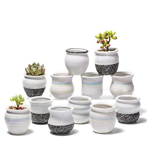 Potaroma Ceramic Planter for Succulents, 2 Inch Small Plant Pots Indoor&Outdoor, White Flower Pot Set of 12 with Drainage Hole Tray and Gardening Tools - Plants Excluded ()