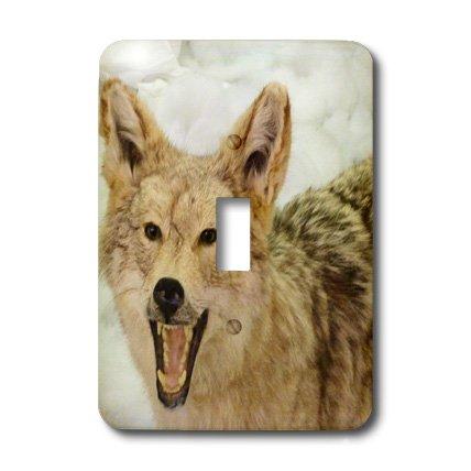 - 3dRose Lsp_23952_1 Coyote Closeup Single Toggle Switch