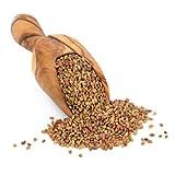 Nature Jims Alfalfa Sprout Seeds – 16Oz Organic