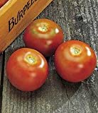 Long-Keeper Tomato 25 Seeds - Great for Storing!