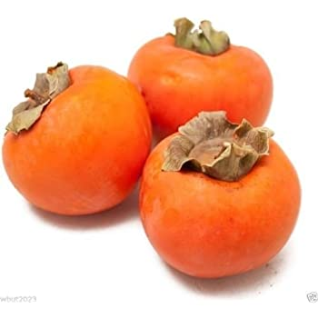Japanese Persimmon,(25 Seed)  Asian Persimmons(Diospyros kaki-Fuyu) Tree Shrub