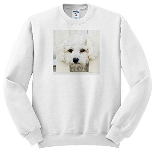 gs - Maltese. Small Breed Dog. Friendly Dog. White. - Sweatshirts - Youth Sweatshirt XS(2-4) (SS_261457_9) (Maltese Youth Sweatshirt)