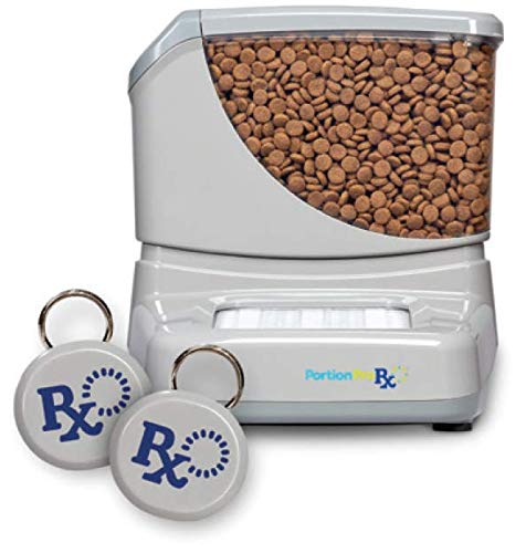 best cat food dispenser