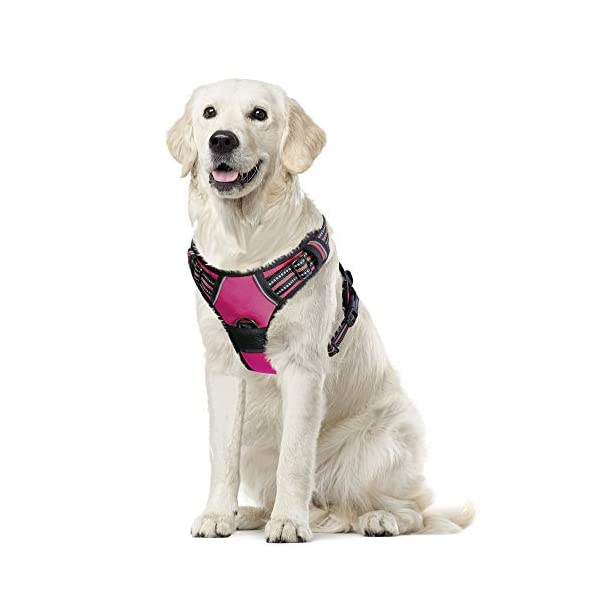 Eagloo Dog Harness No Pull, Walking Pet Harness with 2 Metal Rings & Handle Adjustable Reflective Breathable Oxford Soft Padded Easy Control Front Clip Vest Harness Outdoor for Small Medium Large Dog 1