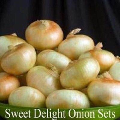 Onion Sets, Sweet Delight,(30 Bulbs) Onion Sets - Organic ,Heirloom - Non-GMO