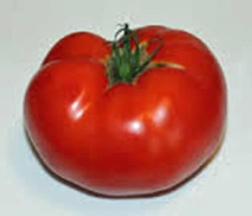 Tomato Seeds,Rutgers Tomato, Heirloom, Organic 25+ Seeds, Non GMO, VEGATABLE