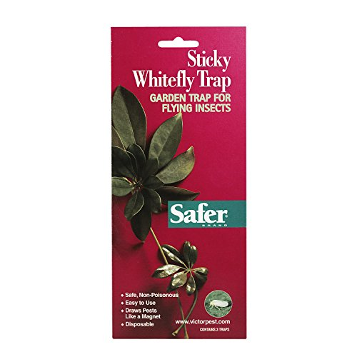 (Safer Brand Sticky Whitefly Traps (3 Traps) 00340)