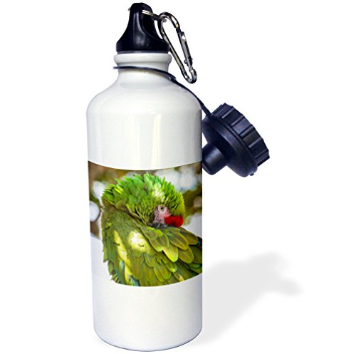 3dRose Use, Garland USA, Florida, Orlando, Green Macaw, Gatorland. -Sports Water Bottle, 21oz (wb_209443_1), Multicolored