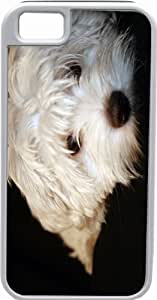 Rikki KnightTM Maltese Puppy White Tough-It Case Cover for iPhone 4 & 4s (Double Layer case with Silicone Protection)