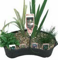 Mixed Marginal Plant Contour Basket 8 Ltr