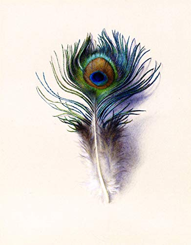 (Charles Herbert Moore Peacock Feather 1882 Fogg Museum of Art - Harvard University 30