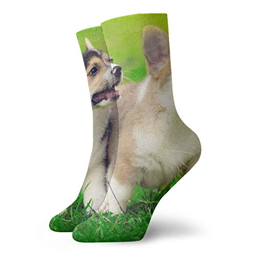 BINGZHAO Cute Pembroke Welsh Corgi Puppies Running Casual Crew Socks,Thin Socks Short Ankle for Outdoor,Running,Athletic,Travel