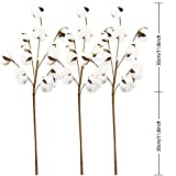 Coceca Cotton Stems - 3 Pack 10 Balls Per Stem - 23 Inch Farmhouse Display Filler-Foral Decoration