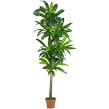 Nearly Natural 6596 Real Touch Dracaena Silk Plant, 6-Feet, Green
