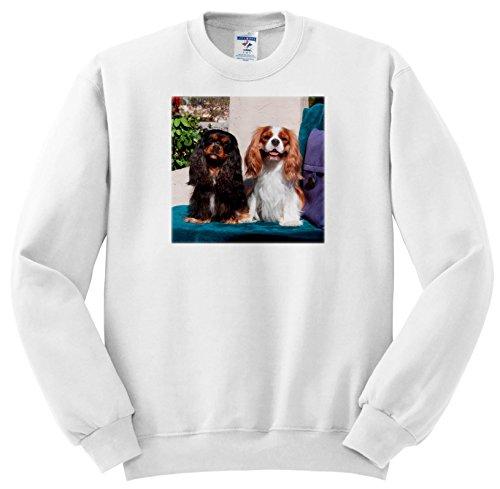 3dRose Danita Delimont - Dogs - Cavalier King Charles Spaniels Posing, MR - Sweatshirts - Youth Sweatshirt Med(10-12) ()