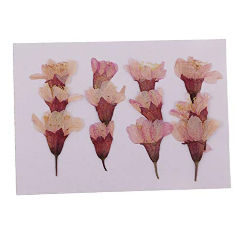 Fityle 12 Pack Real Cherry Blossom Sakura Pressed Flower Natural Dried Flowers Plant Specimen Filler for Scrapbook, Card, Art Crafts, Epoxy Resin Jewelry DIY