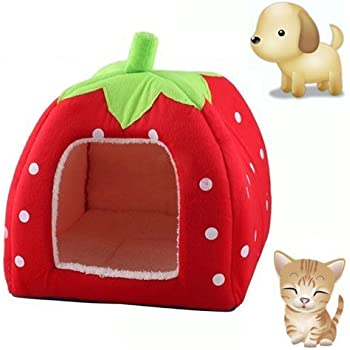 Amazon.com: KINGMAS Cute Soft Sponge Strawberry Pet Cat