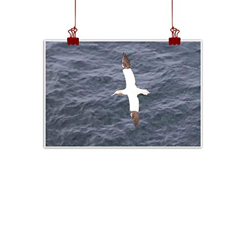 (duommhome Modern Oil Paintings Birds of Faroe Islands - Northern Gannet Bedroom Bedside Painting 24