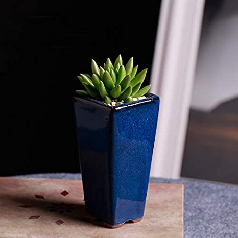 Amazon Com Better Way Ceramic Round Minimalist Succulent Cactus