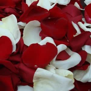 Amazon Com Red And White Rose Petals 6 000 Rose