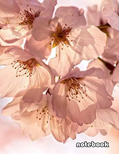 Sakura Spring - notebook: 8.5x11 cute lined journal | spring sakura cherry blossoms pink flower
