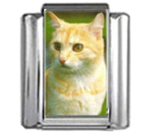 Italian 9 Mm Photo - Stylysh Charms CAT Ginger White Photo Italian 9mm Link CA056