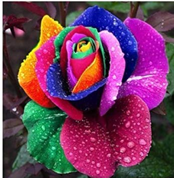 Kofun Flower Vegetable Fruit Seeds Petal Plants Home Garden Yard Decor Rose Seeds Four Seasons Easy to Plant Live Flowers - Multi-Color Mix (60 Pieces)